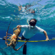 Stock Photo: Spearfishing for lobster
