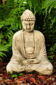 Buddha meditating with ferns in the background — Stock Photo