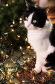 Pretty cat with Christmas lights — Stock Photo