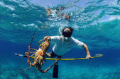 Spearfishing for lobster — Stock Photo