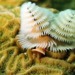 Soft coral in ocean — Stock Photo