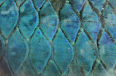 Abstract fish scale background — Stock Photo