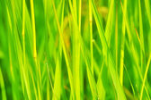 Juicy grass — Stock Photo