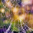 Cobwebs in the dew — Stock Photo
