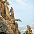 Pine trees on the steep cliffs — Foto de Stock