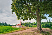 The tree on the background of Priory Palace Gatchina. Russia — Stock Photo