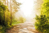 Forest road in the fog — Stock Photo
