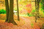 Sökväg i parken hösten utspridda med nedfallna löv. — Stockfoto