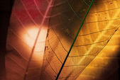 Carcasses from the leaves to the light. — Stock Photo