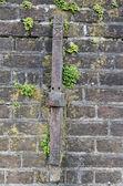 Stary mur z roślin — Zdjęcie stockowe