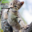 Foto de Stock  : Little cat on tree