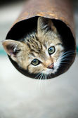 Kitten in a pipe — Stock Photo