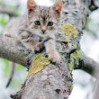 Stock Photo: Little cat on the tree
