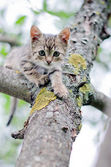 Little cat on the tree — Stock Photo