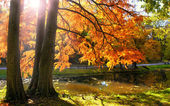 Autumn forest at sunset. — Stock Photo