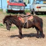 ������, ������: A sad Pony