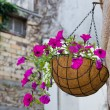 Hanging flowers basket - Stock Photo