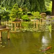 Stock Photo: Pond with bonsai
