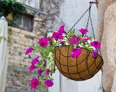 Hanging flowers basket — Stock Photo