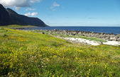 Coast of Lofoten — Photo