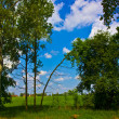 Stock Photo: Trees, sky