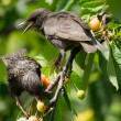 Birds on the tree - Foto Stock