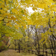 Autumn in forest — 图库照片 #11620070