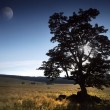 Stock Photo: Solitary tree on meadow and cattle