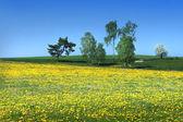 Träd på maskros fältet — Stockfoto