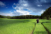 Cornfield with clouds and persone — Stock Photo