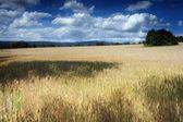 Campo e nuvens — Fotografia Stock