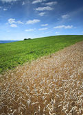Field on mountains — Foto Stock