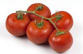 在世界最佳西红柿 — 图库照片