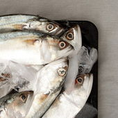 Indian Mackerel on Ice — Stock Photo