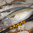 Indian Mackerels - Stock Photo