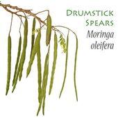 Drumstick Plant also known as Moringa oleifera — Stock Photo