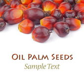 Oil palm Seeds — Stock Photo