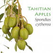 Young Tahitian Apples - Spondias cytherea — Stock Photo