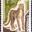 "Stock Photo: MAURITANI- CIRC1963: stamp printed in Mauritanifrom ""Animals"" issue shows cheetah, circ1963."