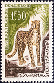 "MAURITANIA - CIRCA 1963: A stamp printed in Mauritania from the ""Animals"" issue shows a cheetah, circa 1963. — Stock Photo"