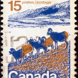 CANADA - CIRCA 1972: A stamp printed in Canada shows American bighorns, circa 1972. - Stock Photo