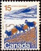 Canadá - cerca de 1972: um selo imprimido no canadá mostra muflão americano americano, por volta de 1972. — Fotografia Stock
