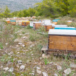 Stock Photo: Bee hives in forest