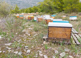 Bee hives in a forest — Stock Photo