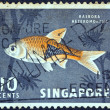 SINGAPORE - CIRCA 1962: A stamp printed in Singapore shows a Harlequin rasbora fish, circa 1962. - Stock Photo