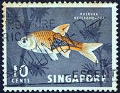 SINGAPORE - CIRCA 1962: A stamp printed in Singapore shows a Harlequin rasbora fish, circa 1962. — Foto Stock