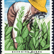 GREECE - CIRC1966: stamp printed in Greece issued for 4th International Tobacco congress in Athens shows farmer tending tobacco plants, circ1966. — Stock Photo #11629648