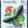 AUSTRALIA - CIRCA 1981: A stamp printed in Australia shows a Cairns birdwing butterfly, circa 1981. — Stock Photo #11639097
