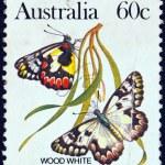AUSTRALIA - CIRCA 1981: A stamp printed in Australia shows a Wood white butterfly, circa 1981. — Stock Photo #11639108