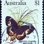 AUSTRALIA - CIRCA 1981: A stamp printed in Australia shows a Sword-grass brown butterfly, circa 1981. — Stock Photo